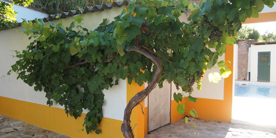 Vingårdar nära Caldas da Rainha finns, här Farm Holidays Silver Coast på Silverkusten i Portugal.
